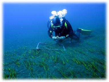 Ecología y Biología Marina | HIDTMA | Biología marina y sus curiosidades | Scoop.it