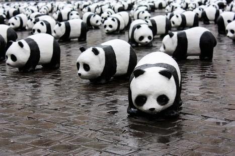 Getting Cozy on the SEO Panda Veranda | Digital-News on Scoop.it today | Scoop.it
