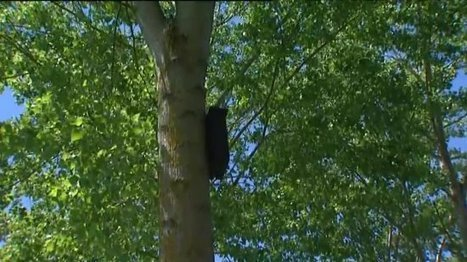 Marmande : des chauves-souris contre les moustiques-tigres - France 3 Aquitaine | De Natura Rerum | Scoop.it