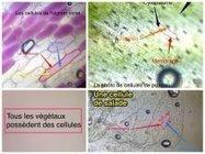 Des applications pour tablettes à usage pédagogique - Dane de l'académie de Versailles | mlearn | Scoop.it