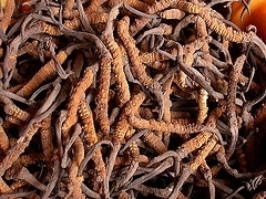 Anti-HCV activity of the Chinese medicinal fungus Cordyceps militaris. - PubMed - NCBI | Vitae Herbae | Scoop.it