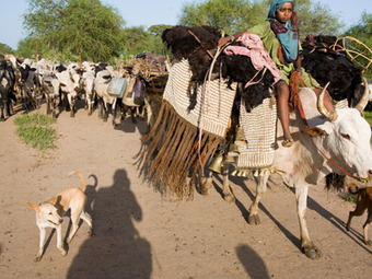 """HowStuffWorks """"Why is the Sahel shifting?"""" 