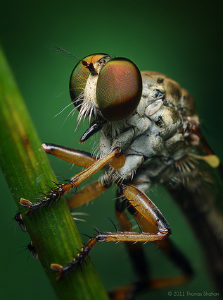 A Bug's Life in Macro | Fashion Models Photography | Scoop.it
