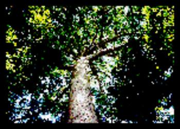(DE) - Materialien zur Forstwissenschaft | Margarete Payer | Glossarissimo! | Scoop.it