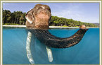 Andaman Tour Packages   Andaman Travel Guide   Scoop.it