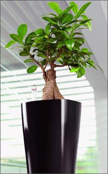 Stainless steel planters | Stainless Steel Planters is the best planter for gardening | Scoop.it