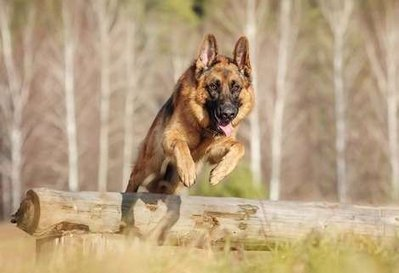 The 10 Easiest Dog Breeds to Train | Dog Lovers | Scoop.it
