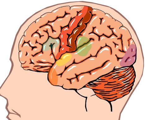Aivot | Psykologia, sen tutkimus ja soveltaminen | Scoop.it