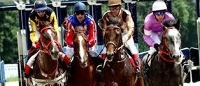 Horse Racing Programs – Find The Tips And Advises To Win The Races Easily   Thoroughbred Analytics   Scoop.it