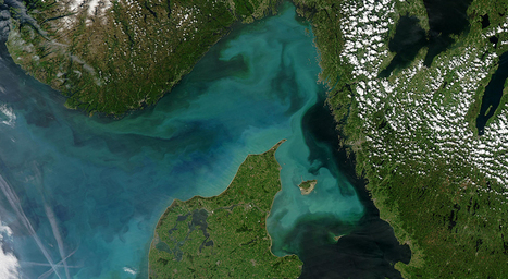 Viruses might tame some algal blooms | Science News | Virology and Bioinformatics from Virology.ca | Scoop.it