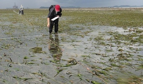 The end of field ecology? | Agricultural Biodiversity | Scoop.it