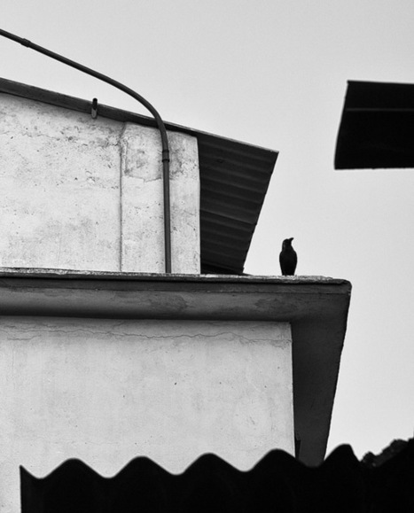 Why its a great idea to include birds in a street photography | Urban Decay Photography | Scoop.it