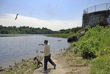 Dam's removal in Augusta is a wildlife success story - Press Herald | Fish Habitat | Scoop.it