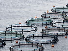 FAO 2014 Report Highlights the Growing Role of Aquaculture in Feeding the World | Aquatic Vet News You-can-Use | Scoop.it
