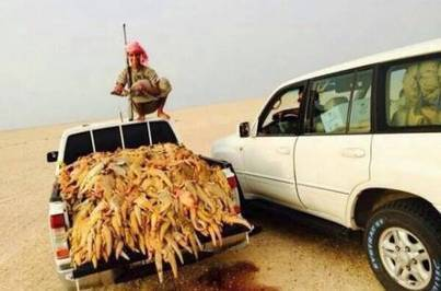 Truckloads of spiny tailed lizards poached in desert
