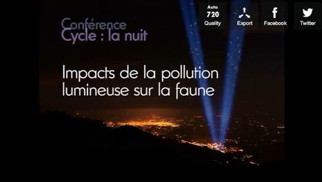 Impacts de la pollution lumineuse sur la faune | EntomoScience | Scoop.it