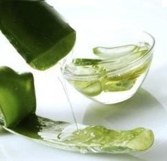 Aloe Vera Gel – Pure Aloe Vera Gel Wholesale Suppliers and Manufacturers, India | Essential Oil,Avocado Carrier Oil,Basil Essential Oil,Bergamot Essential Oil | Scoop.it