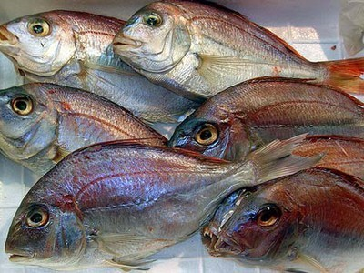 Caught Red-Snapper-Handed: New Identification Technique Could Stop Fish Poachers | Vertical Farm - Food Factory | Scoop.it