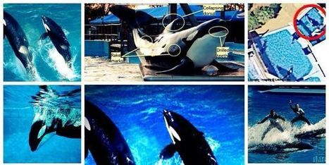 petition: Free tilikum for seaworld | ~Environment,wildlife,children,human rights and global issues~ | Scoop.it