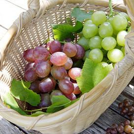 El secreto del vino está en los tipos de uva | Alto Nivel | Uva (Vitis vinifera) | Scoop.it