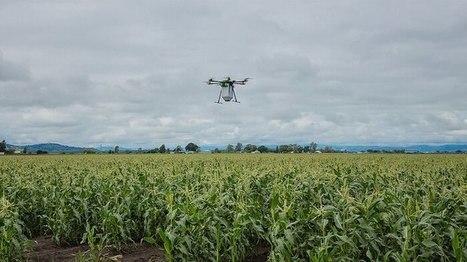 La technologie des drones utilisée pour répandre des acariens bénéfiques à la récolte de maïs | EntomoNews | Scoop.it