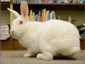 Bunny's Blog: Favorite Video Friday: Meet Morrison! | Pet News | Scoop.it