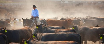 Leadership lessons from a cowboy named Rooster and a horse named Clyde « Purpose Unlimited | Coaching Leaders | Scoop.it