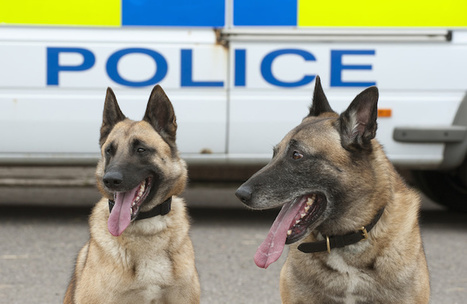 Wag the Dog: Cops Are Out of Control!! - Calibre Press | Police Problems and Policy | Scoop.it