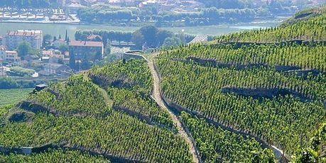 Climat : les vignobles de Bordeaux et de la vallée du Rhône menacés dès 2050 | love this planet | Scoop.it