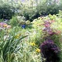 Gardening Jargon: What It Really Means   Gardens and Gardening   Scoop.it