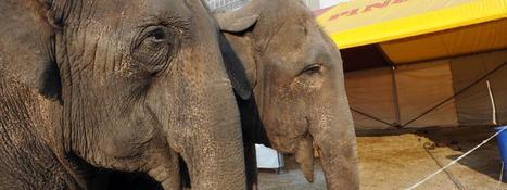 Unique en Europe, un sanctuaire pour éléphants va ouvrir dans le Limousin | Chronique d'un pays où il ne se passe rien... ou presque ! | Scoop.it