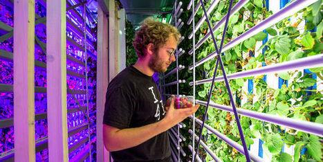Et si on cultivait des fraises en ville, dans des containers ? | Potagers urbains | Scoop.it