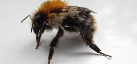 One in ten European wild bee species face extinction - Wildlife Articles | GarryRogers NatCon News | Scoop.it