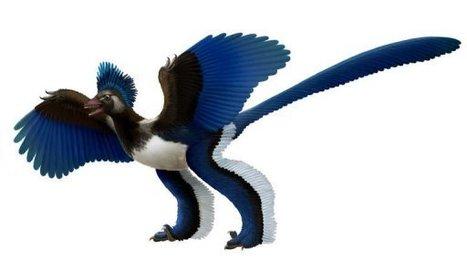 L'Archaeopteryx n'était pas l'ancêtre des oiseaux, mais un dinosaure à plumes   Aux origines   Scoop.it