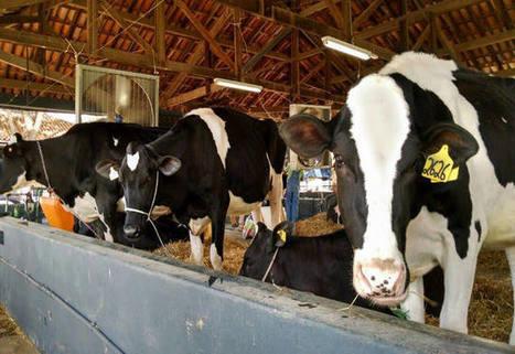 Produção de leite: gastos com silagem e reforma de pasto aumentam | Producción Lechera | Scoop.it