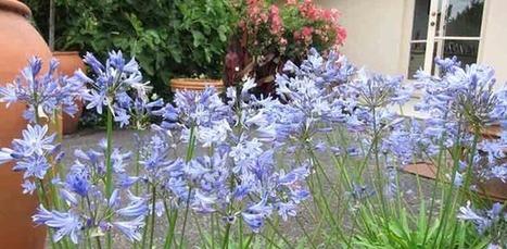 Your Easy Garden from Tesselaar Plants | Annie Haven | Haven Brand | Scoop.it