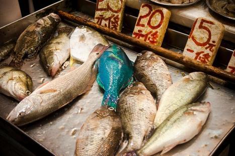 Detectados peces con altos niveles de radiactividad en Fukushima | Ciencia, política y Derecho | Scoop.it