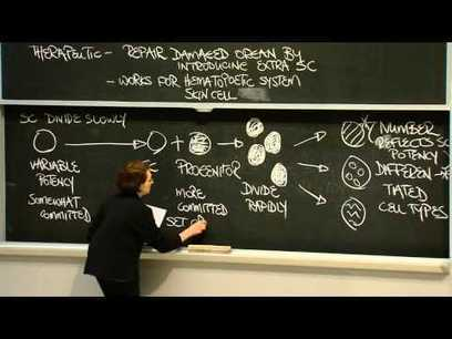 Introduction to Stem Cells - MIT | Stem Cells & Tissue Engineering | Scoop.it