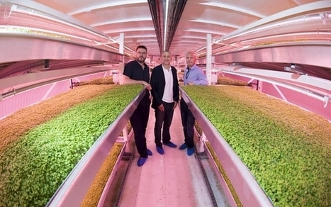 London's first underground farm opens in WW2 air raid shelter | IT Trends, StartUps & something more... | Scoop.it