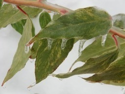 Native Plants for ConnecticutGardens | Native Plants | Scoop.it