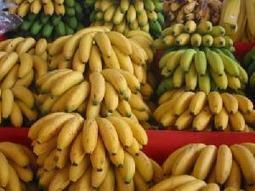 Les exportations de la banane camerounaise chutent de 10% en 2012 - Ici Cemac | T'as la bannanne couzain ! | Scoop.it