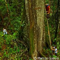 La pollution perturbe le cycle d'azote des forêts tropicales | Toxique, soyons vigilant ! | Scoop.it