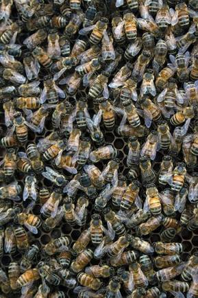 Land-Use Change Rapidly Reducing Critical Honey Bee Habitat in Dakotas | La recherche en apiculture | Scoop.it