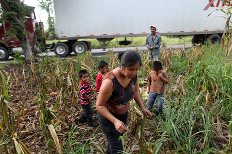 THE BIOFUEL LANDGRAB : THE DISPOSSESSED IN GUATEMALA - SlideShow | Biodiversity IS Life  – #Conservation #Ecosystems #Wildlife #Rivers #Forests #Environment | Scoop.it