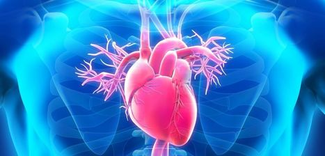 Protein clue to sudden cardiac death   University of Oxford   Drug discovery and drug safety   Scoop.it