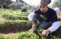 """Cultivo de huertos para autoconsumo como """"alternativa"""" al desempleo   agricultura ecologíca   Scoop.it"""