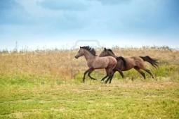 Gli antenati femminili dei cavalli rintracciati nel Kazakhastan | World Neolithic | Scoop.it