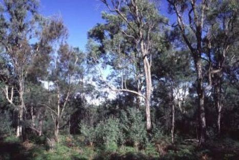 New mining plans to identify Hunter biodiversity risks | GarryRogers Biosphere News | Scoop.it