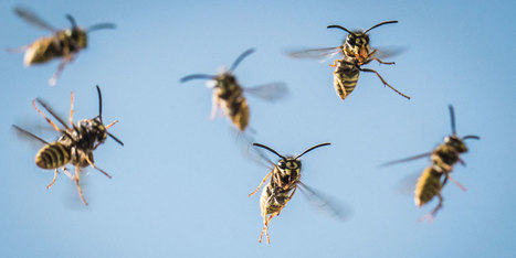 Les insectes, des pollinisateurs ignorés | Mes passions natures | Scoop.it