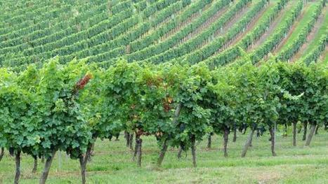 Pesticides. Ouverture d'une enquête après le décès d'un vigneron | Education environnement | Scoop.it